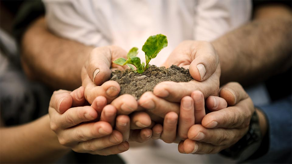 Hands-of-farmers-family-holdin-sapling