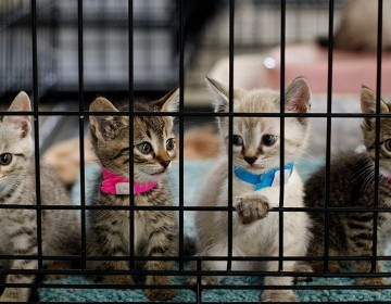 kittens-in-shelter-69469